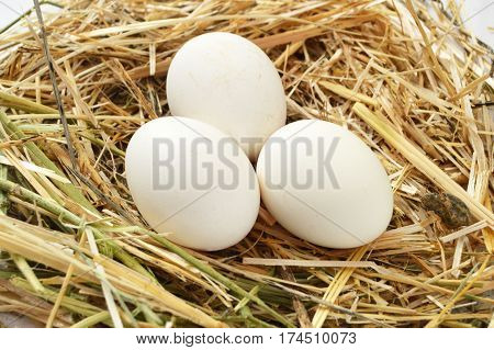 Herbs and plants in the chicken eggs, chicken nest and eggs, pictures of the eggs in the quail's nest, chicken and quail eggs, pictures of the chicken eggs in the most beautiful white ground