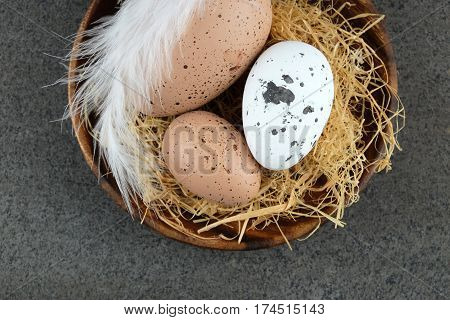 Easter quail eggs and white quill on wooden plate on dark background.