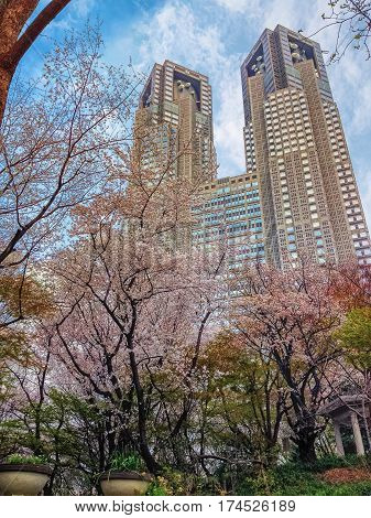 TOKYO JAPAN - MARCH 28 2013: Shinjuku Chuo Park in time of sakura blooming with Tokyo Metropolitan Government Building on the background