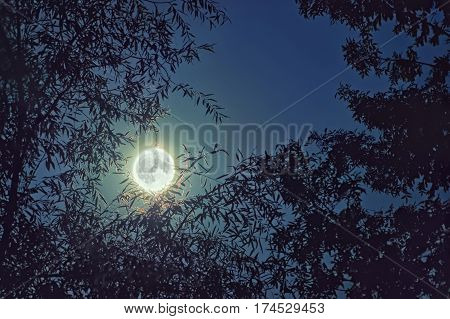 Full moon night view through tree branches in the forest