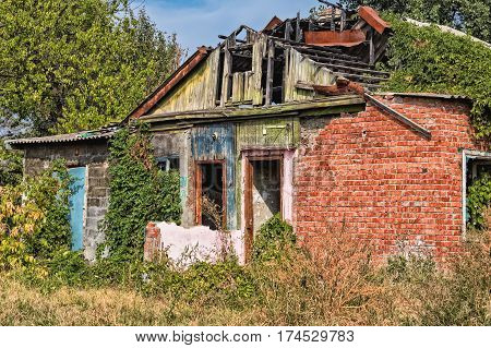 Old ruined brick house with hop plant