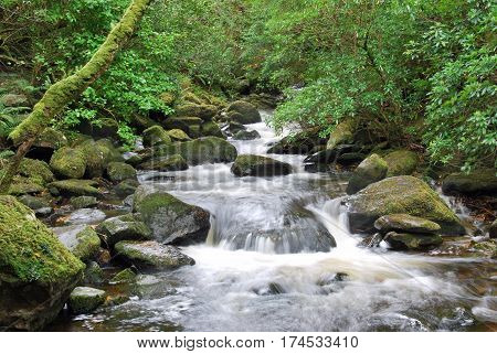 Idyllic river stream in the green woods rolling over rocky stones in Ireland