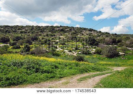 Flowering spring Judean Hills and road in Israel
