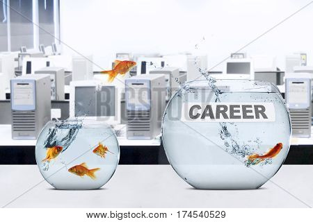 Picture of goldfish leaps to better aquarium with career text on the table concept of better career