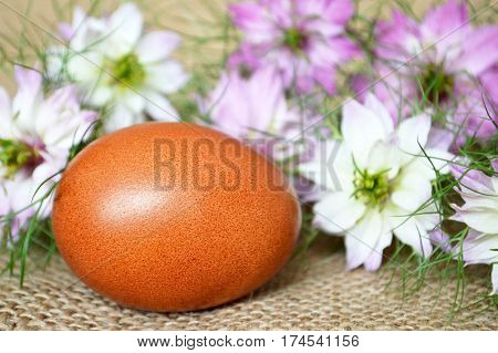 Brown Easter egg and nigella flowers on canvas