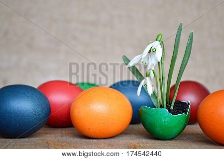 Colorful Easter eggs and spring flowers planted in eggshell