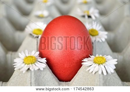 Easter egg and daisies in egg box