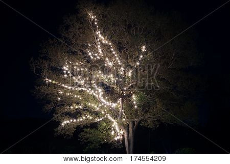 bulb lighting on the bough tree in night sky background.