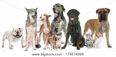 group of pets in front of white background