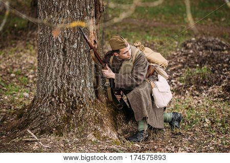 Pribor, Belarus - April 23, 2016: Re-enactor Dressed As Russian Soviet Infantry Soldier Of World War II Hidden Sitting With Rifle Weapon In An Ambush Near Tree In Autumn Spring Forest