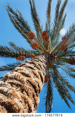 View Into The Sky Through A Date Palm Close-up Shot