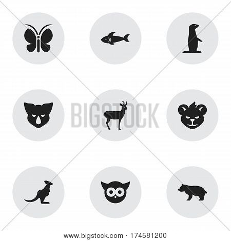 Set Of 9 Editable Zoo Icons. Includes Symbols Such As Polar Animal, Groundhog, Tiger And More. Can Be Used For Web, Mobile, UI And Infographic Design.