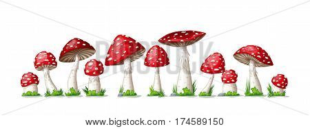 Illustration of some fly mushrooms in front of white background panoama