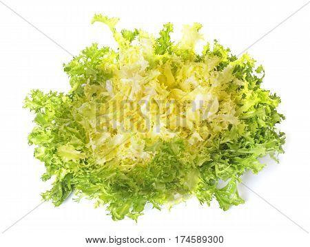 curly endive in front of white background
