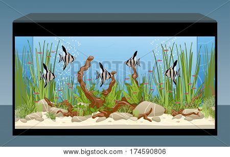 Home nature aquarium with fish and plants
