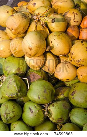 fresh raw green and yellow coconuts fruits background in South India