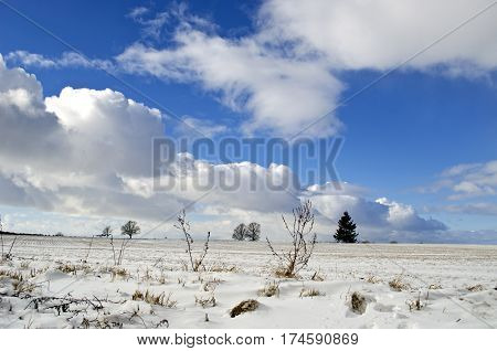 Midwinter snowy landscape with trees and sky clouds in space