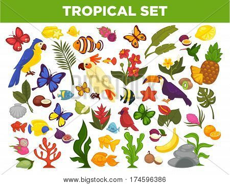 Tropical and exotic fruits, birds or butterflies, fishes and plant flowers. Vector isolated icons set