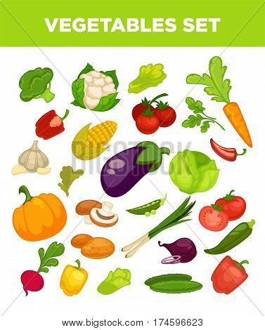 Vegetables set of cauliflower, corn and beet, pumpkin and leek onion, tomato and broccoli, Vector veggies set of cabbage or zucchini squash, mushroom champignon and green peas