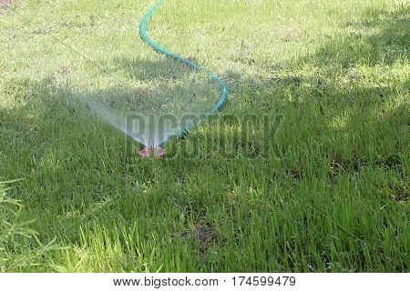 beautiful garden grassy green lawn watered using water sprays