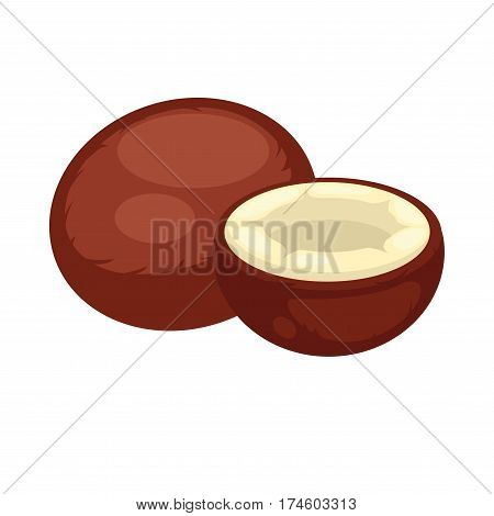Coconut whole and half isolated on white background. Drupe, not nut. Cocoa fruit, with edible flesh and milk, refreshing drink. Vector illustration of exotic item widely used in cosmetics and as oil