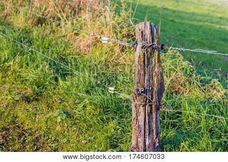 Unprofessional installed electric fence and a weathered wooden pole at the edge of a meadow.