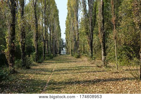 Milan (Lombardy Italy): a path in the park known as Parco Nord in october