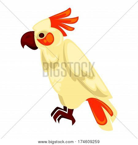 Parrot macaw standing with orange and beige feathers isolated on white. Tropical animal of big size with wings that can fly, with brown beak and paws. Vector flat illustration of isolated ara bird