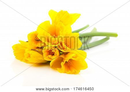 yellow bouquet narcissus flowers on white background