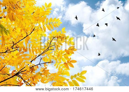 flying birds and tree with yellow leaves on the blue sky with clouds