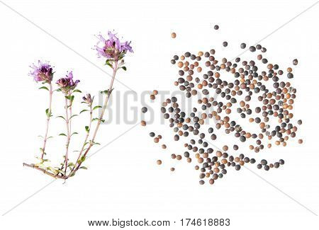 wild thyme (Thymus serpyllum). Flower and seeds isolated on white background