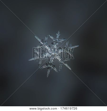 Macro photo of real snowflake: medium size snow crystal of stellar dendrite type with thin and sharp arms, sparkling on dark cyan blur background.