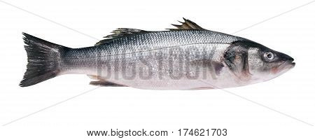 Seabass carcass isolated on a white background