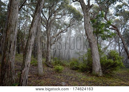 A misty patch of bushland in Australia