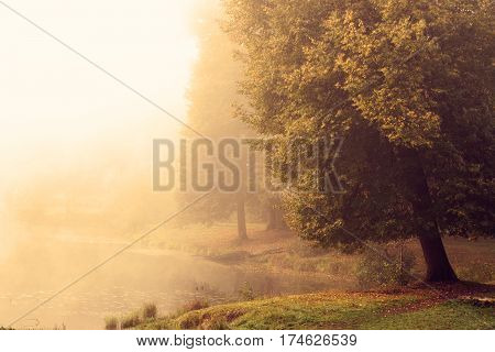 Large aspen on the lake heavy fog autumn morning.