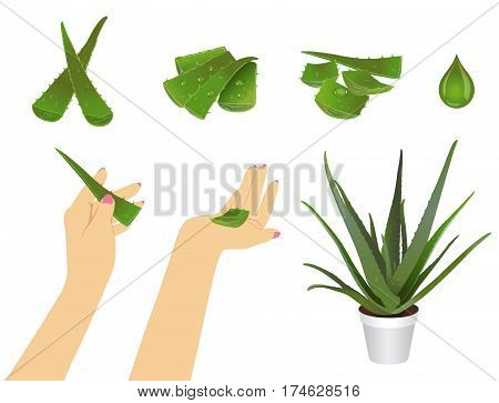 aloe pieces at different positions on a white background