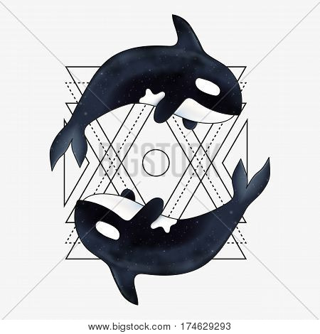 Orca vector illustration. Marine mammal. Killer whale with abstract geometric element