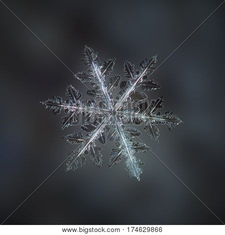 Macro photo of real snowflake: very big and complex snow crystal of stellar dendrite type with six long arms and numerous side branches and icy