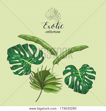 Exotic Collection Of Hand Drawn Tropic Leaves.