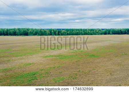 View of the plowed field and the woods on a summer day