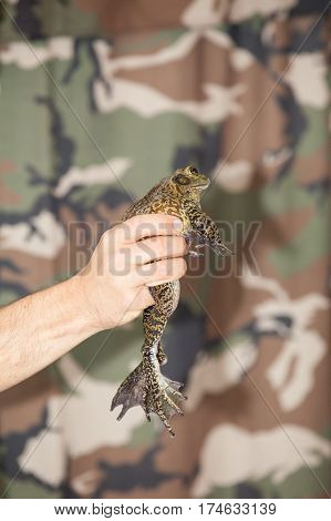 Hand holding frog during event on birthday party