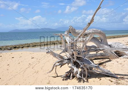 Lonely piece of driftwood on a sandy beach in western Australia.