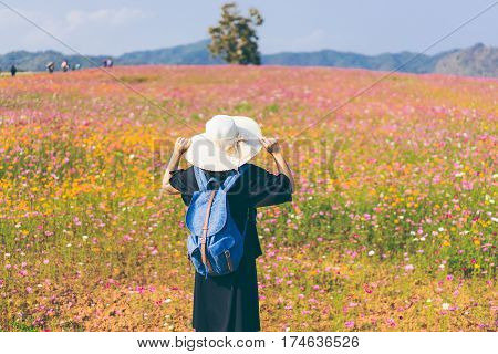Woman tourist is traveling into cosmos flower field in Chiangrai Provice Thailand. Woman traveller with white hat and bag standing looking beautiful flower in cosmos flower field.