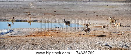Animals in Etosha National Park, Namibia, Africa
