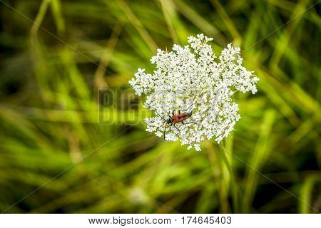 Red insect in strong sunlight against lush green background
