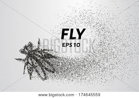 Fly From Particles. The Fly Consists Of Circles And Points. Vector Illustration