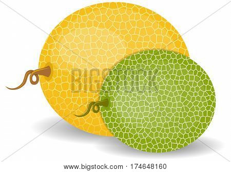 Fresh sweet green melon. flat style. Set of yellow and green melon isolated on white background