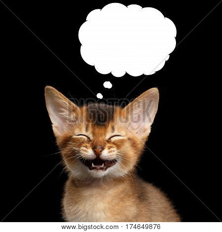 Laughs Abyssinian Kitty with closed eyes think funny in cloud on Isolated Black Background