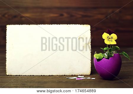 Blank Easter card with flower in eggshell