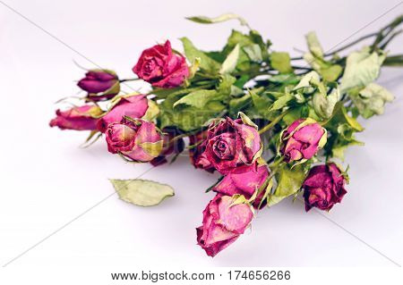 Bouquet of wilted roses on light background
